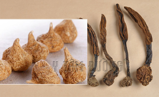 Thuốc bắc ngâm rượu: Củ Maca và Nấm ngọc cẩu