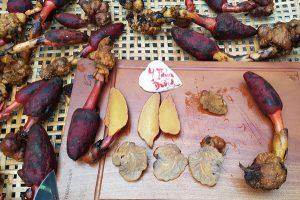 Tác dụng của nấm ngọc cẩu ngâm rượu