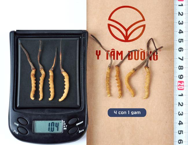 Đông trùng hạ thảo Tây Tạng loại 1 gam có 4 con
